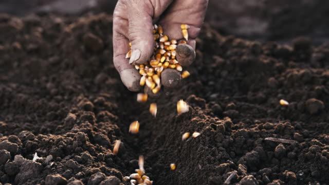 En cámara lenta agricultores sembrar las semillas de la mano - vídeo