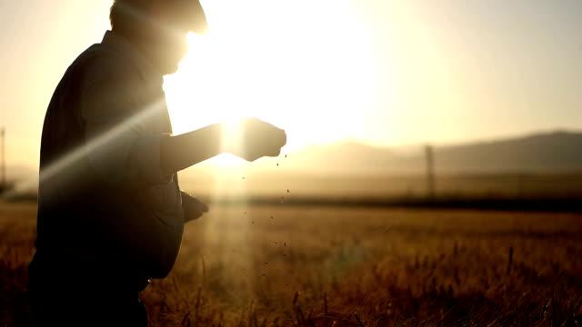 hd super slow mo: farmer's hands with wheat grains - турция стоковые видео и кадры b-roll
