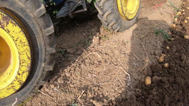 Farmers Harvesting Homegrown Organic Potato Farmers Harvesting Homegrown Organic Potato. red potato stock videos & royalty-free footage