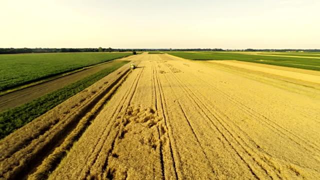 空から見た農家の収穫、小麦 - マルチコプター点の映像素材/bロール
