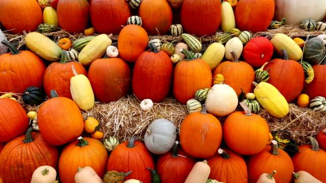 farmer's market halloween thanksgiving - pumpkin stock videos & royalty-free footage