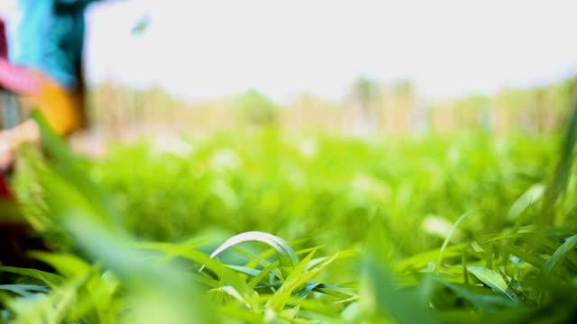 Farmer's Pick vegetables, morning glory video