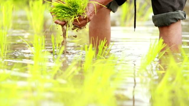 水田、スローモーションに田植え - 水田点の映像素材/bロール
