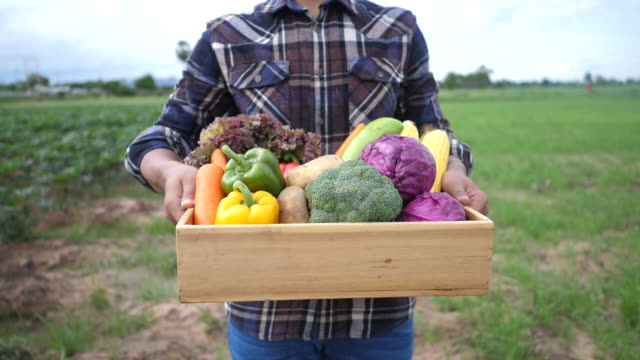 Farmers raise organic vegetable crates to show to customers - video