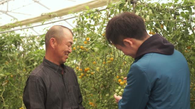農家話題のトマトの品質 ビデオ