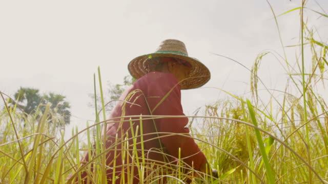 Farmers video