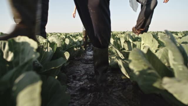 vidéos et rushes de agriculteurs marchant à travers la boue sur le champ de chou - bottes