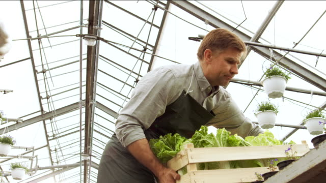 Farmers Work as a Team Passing Box of Vegetables to Each other. They Work in the Big Industrial Greenhouse. video