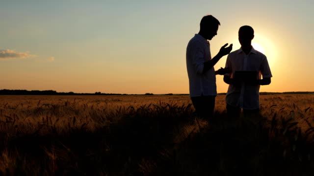 Farmers Work In the Field of Wheat video