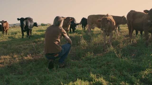 il lavoro di un agricoltore non viene mai svolto - bestiame video stock e b–roll