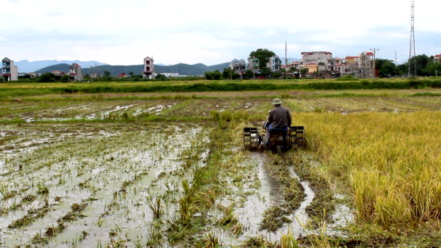 farmers working in the fields, Asia video