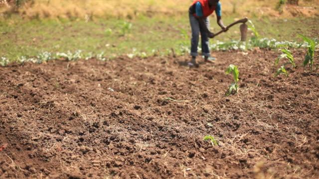 Farmers working on rural African farm video