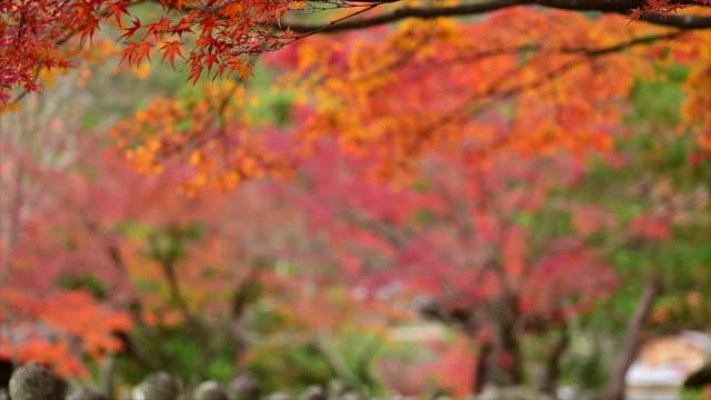 Farming Autumn