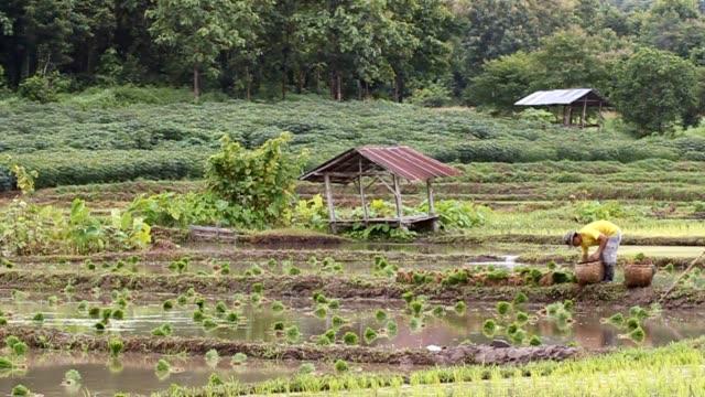 Farming video