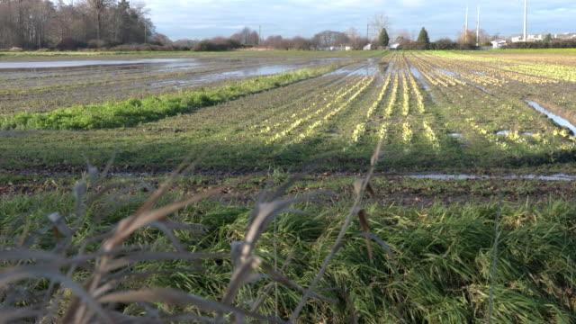 Farmland Flooding video