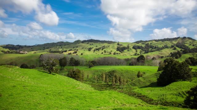 Farmland Near Kohukohu, New Zealand video