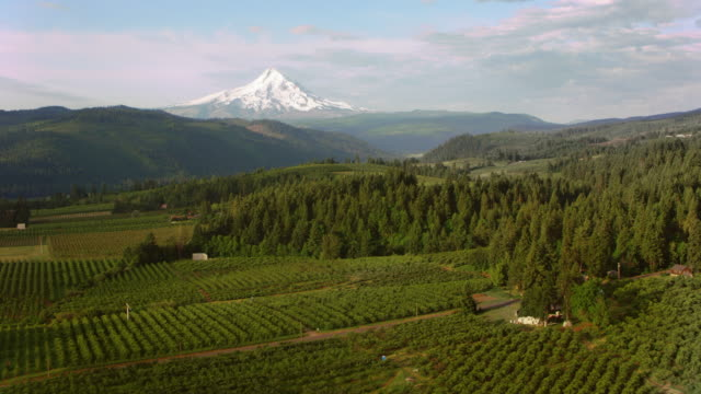 AERIAL Farmland with beautiful view of the Mt. Hood