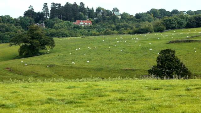 UK farmland with farmhouse video