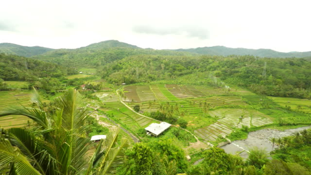 AERIAL Farms Along The River In Bali video