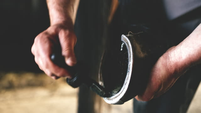 cu farrier in a process of shoeing a horse's hoof - horseshoe stock videos & royalty-free footage