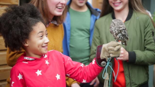 fascinated by the little owl - viaggio d'istruzione video stock e b–roll