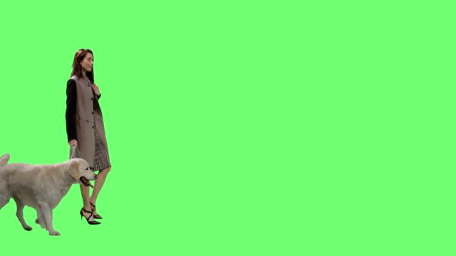 vídeos y material grabado en eventos de stock de moda morena pasea su perro labrador retriever en un fondo de pantalla verde maqueta - abrigo