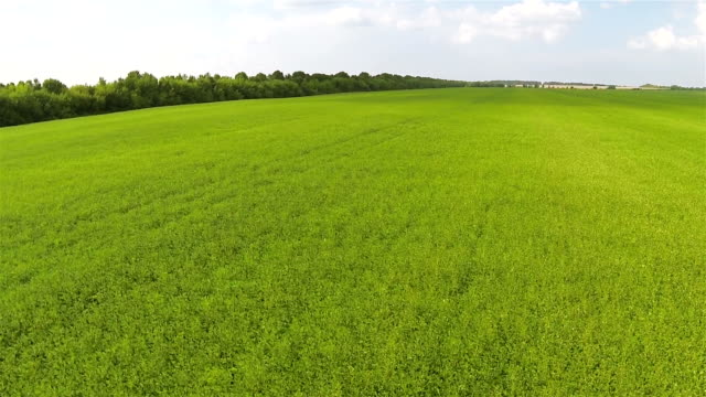Fast Flight over  green field . Aerial  rural  landscape video