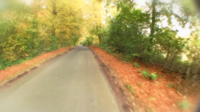 Fast motion drive through tunnel of trees video