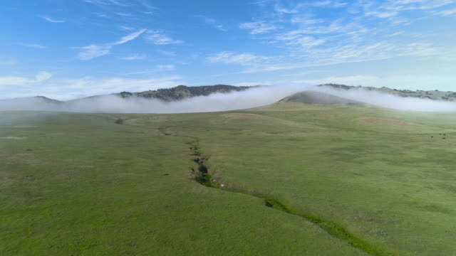 Fast moving low cloud coming from the Pacific Ocean around the hills in San Simeon, California, nearby Cabrillo Highway, and Arroyo Del Oso. The windy sunny spring day. Aerial drone video with the forward camera motion.