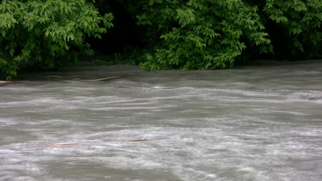 Fast rising flood river touches trees. video
