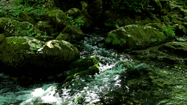 Fast river in deep green forest jungle. video