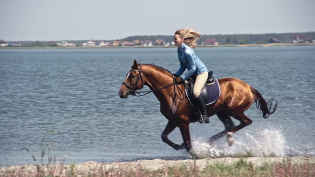 Fast Russian Don Horse Galloping on Water Tracking of brown colored horse with leaning ecstatic female rider on it speeding through lake water in slow motion cowgirl stock videos & royalty-free footage