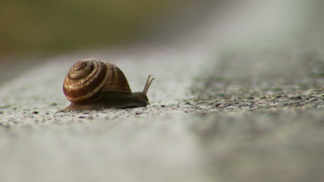 fast snail video