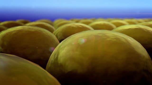 fat cells video