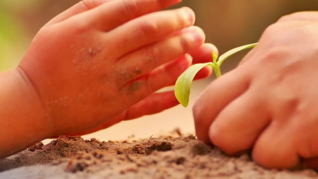 Father and child hands planting a young plant to organic soil over sunlight Father and child hands planting a young plant to organic soil over sunlight slow motion shot planting stock videos & royalty-free footage