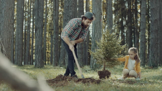 Father and daughter planting a tree Father and son planting a tree in forest planting stock videos & royalty-free footage