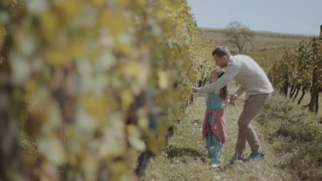vídeos de stock e filmes b-roll de father and daughter walking through vineyard - uva shiraz