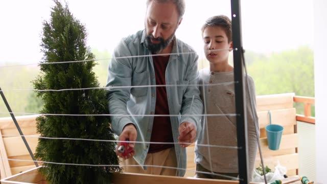 vater und sohn machen auf dem balkon garten - urban gardening stock-videos und b-roll-filmmaterial