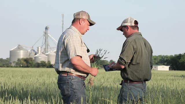 far och son bönder pratar och använder digital tablett i soligt vetefält - kroppsarbetare bildbanksvideor och videomaterial från bakom kulisserna
