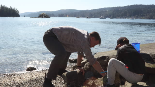 Father and son looks for crabs on west coast beach