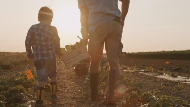 slo mo far och son plocka grönsaker på fältet - farm bildbanksvideor och videomaterial från bakom kulisserna