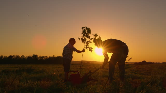 DS Father and son planting a tree in the yard Dolly shot of a father and his little son planting a tree on a field at sunset. Slovenia. environmental conservation stock videos & royalty-free footage