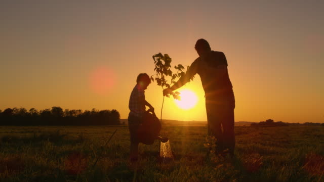 DS Father and son planting a tree in the yard Dolly shot of a father and his little son planting a tree on a field at sunset. horticulture stock videos & royalty-free footage