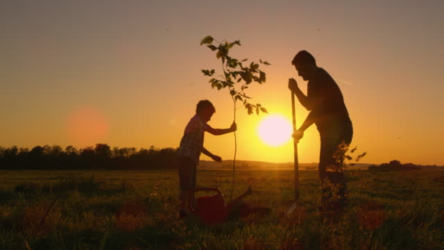 DS Father and son planting a tree Dolly shot of a father and his little son planting a tree at sunset. Slovenia. planting stock videos & royalty-free footage