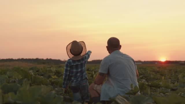 SLO MO Father and son pointing with fingers into the distance in a field at sunset