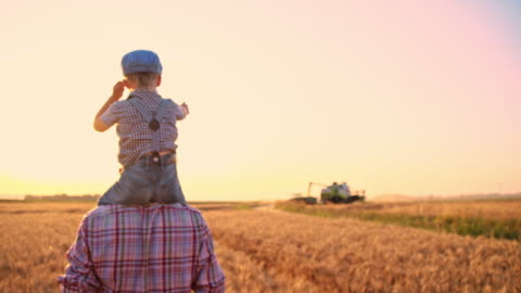 vídeos de stock e filmes b-roll de slo mo pai e filho a andar através cultivada campo - agricultor