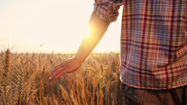 stockvideo's en b-roll-footage met slo mo vader en zoon tarweveld doorlopen - wheat field