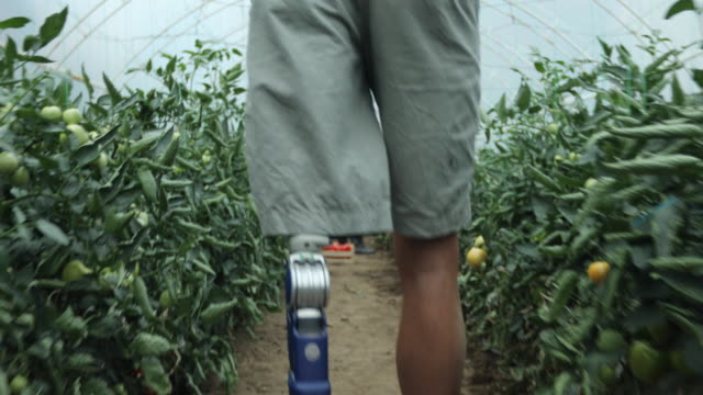 Father and son with prosthetic leg carrying carts filled with tomatoes Father and son with prosthetic leg carrying carts filled with tomatoes from the greenhouse prosthetic equipment stock videos & royalty-free footage