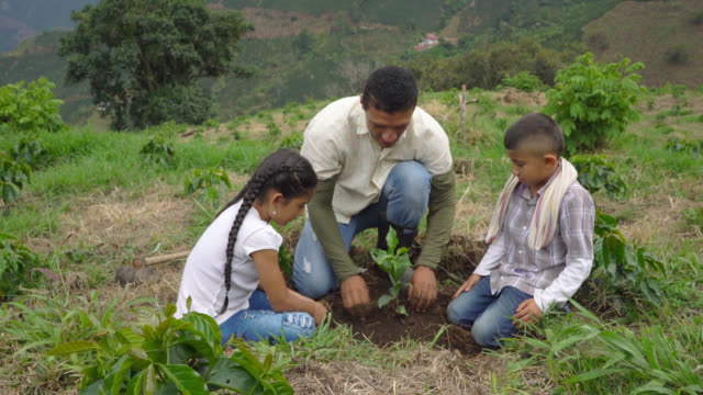 Father, daughter and son planting a coffee plant video