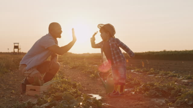 SLO MO Father gives his son a high five for a job well done in the field Slow motion shot of a small boy irrigating lettuce with a watering can while dad comes up to him and gives him a high five for a job well done. Shoot in 8K resolution. lettuce stock videos & royalty-free footage